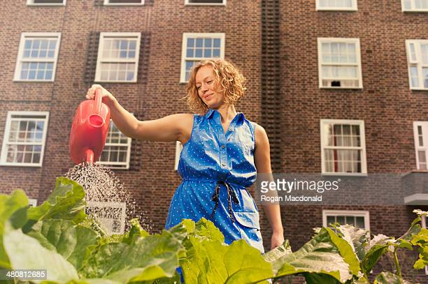 Young woman watering vegetables on council estate allotment