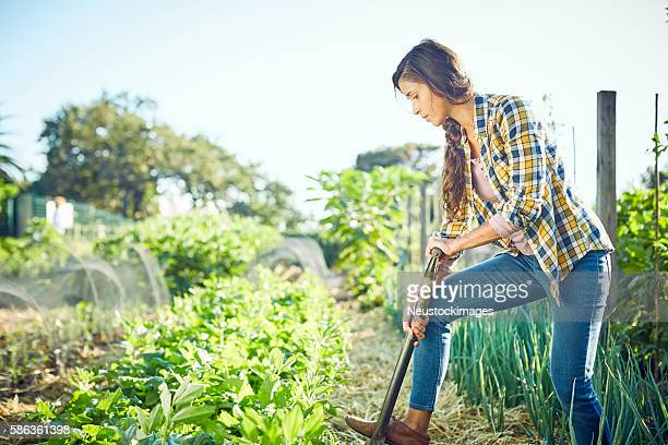 young woman weeding in organic field - organic farm stock photos and pictures