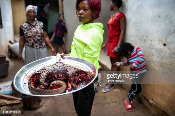 A young woman who works as a street food trader in a small town 60 miles from Yaonde is seen with a juvenile pangolin which she has purchased from a...