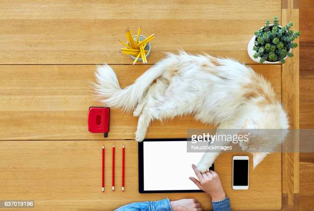 Young woman with cat touching digital tablet on wooden table