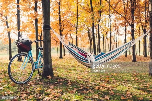 Junge Frau mit niedlichen Hund zum Entspannen in der Hängematte