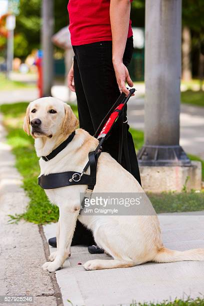 Young woman with guide dog waiting to cross street