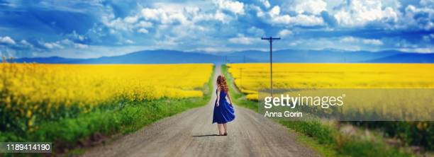 young woman with red hair and bare feet wearing sleeveless blue dress pauses on dirt road lined with vivid yellow canola flowers, holding skirt out and looking at view - long bright yellow dress stock pictures, royalty-free photos & images