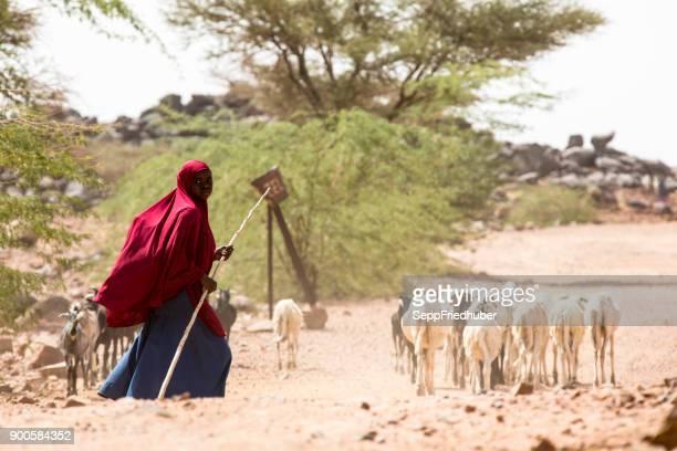 アガデスの近くに羊の群れを持つ若い女性 - ニジェール ストックフォトと画像