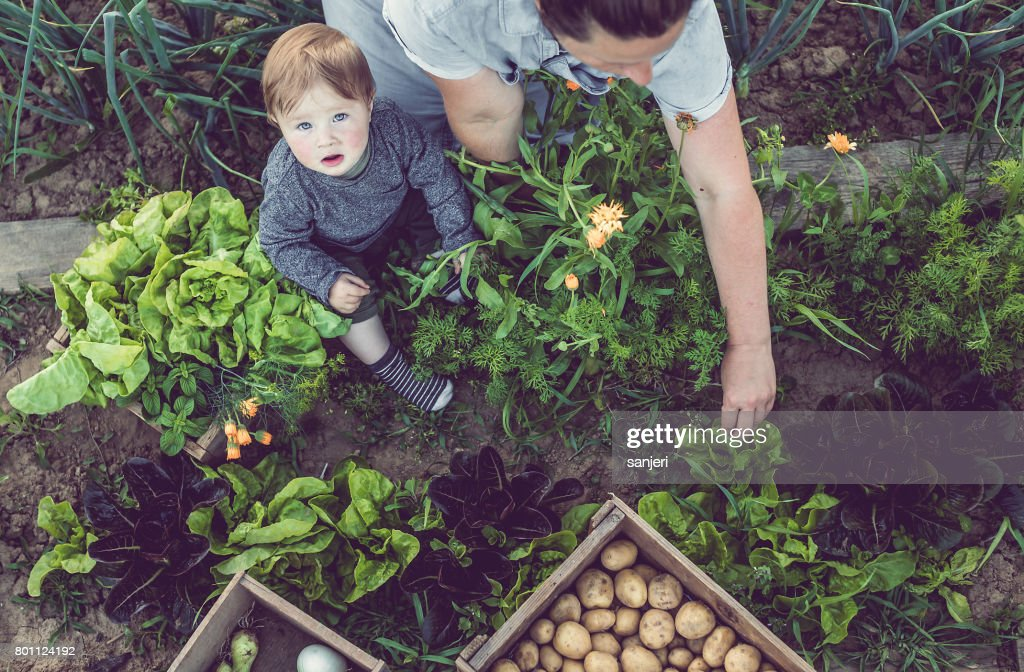 Young Woman With Son Working in a Home Grown Vegetable Garden : Stock Photo