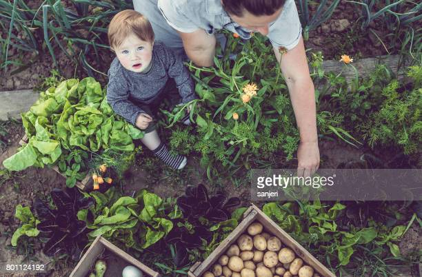 Young Woman With Son Working in a Home Grown Vegetable Garden