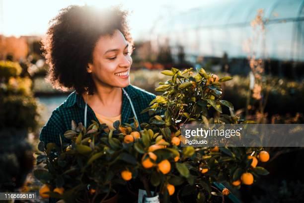mulher nova com árvore do tangerina - orange farm - fotografias e filmes do acervo