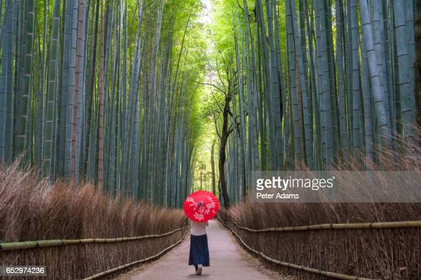 Young woman with umbrella walking through bamboo forest, Kyoto, Japan