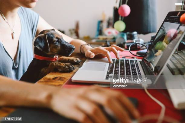 young woman working at home with her pet puppy - remote work stock pictures, royalty-free photos & images