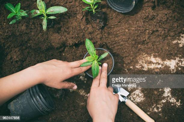 young woman working in a greenhouse planting plants - green fingers stock pictures, royalty-free photos & images