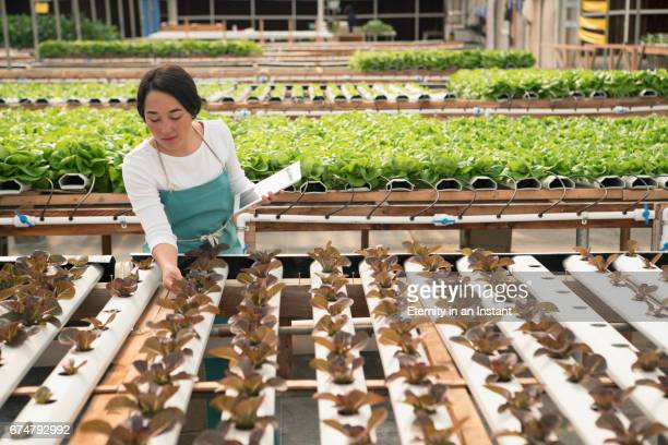 Young woman working in a hydroponic farm