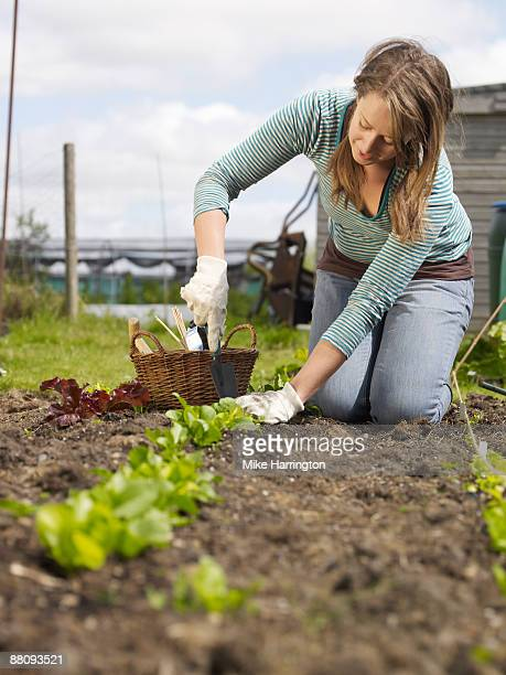 young woman working in allotment - kneeling stock pictures, royalty-free photos & images