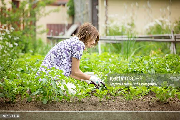 Young woman, working in the garden, getting rid of weed from potato rows, springtime