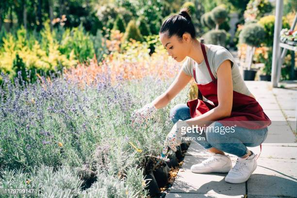 young woman working in the garden - show garden stock pictures, royalty-free photos & images