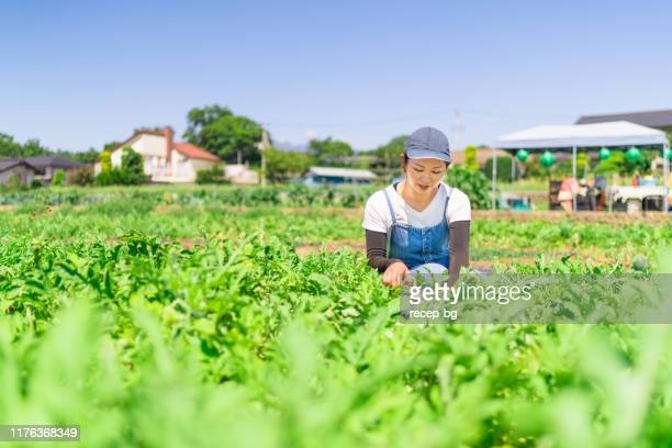 young woman working on farm - agricultural activity stock pictures, royalty-free photos & images