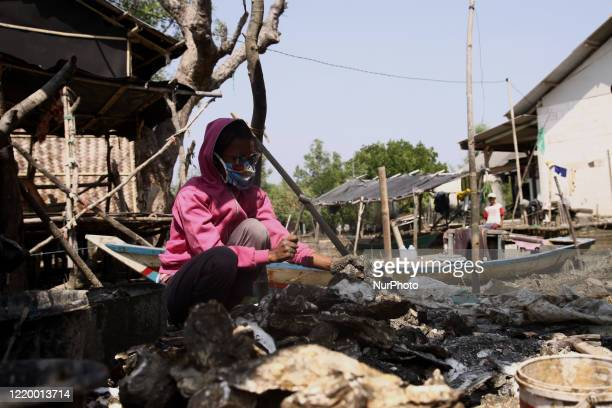 A young woman works as an oyster breaker at Pantai Bahagia village Muara Gembong subdistrict West Java province on June 13 2020 Pantai Bahagia...