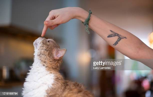 young woman's arm pointing at a cat - lucy lambriex stockfoto's en -beelden