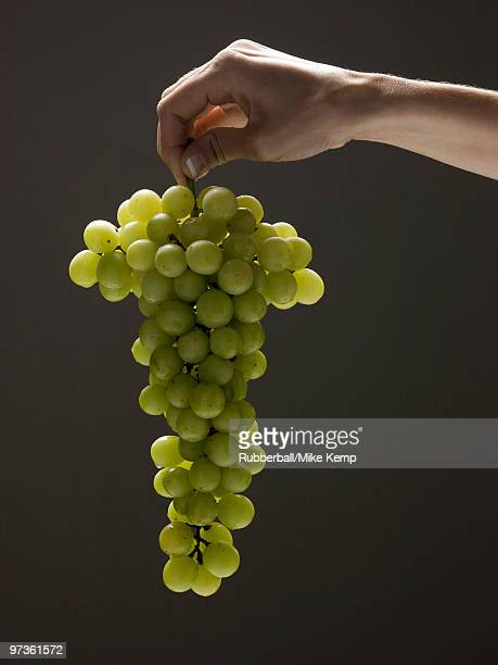 young woman's hand holding a bunch of grapes - white grape stock photos and pictures