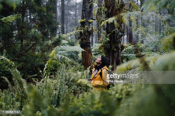 young women explore forest in bandung - bandung stock pictures, royalty-free photos & images