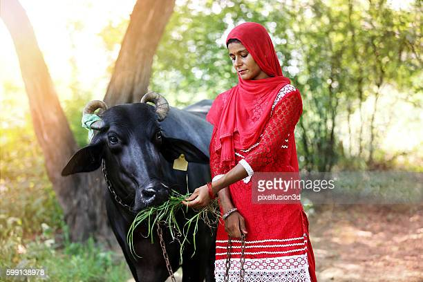 Young women feeding silage to water buffalo