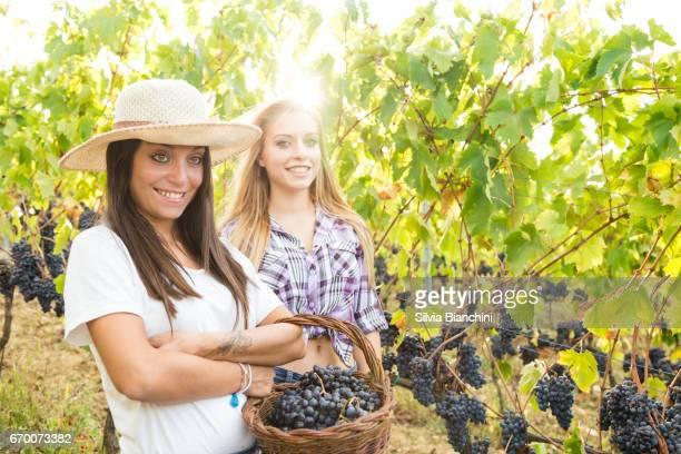 Young women in vineyard harvesting grape