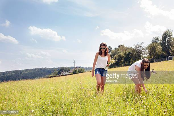 Young women picking wildflowers in field