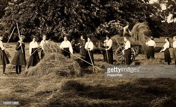 Young women raking hay near Northampton during World War One circa 1915