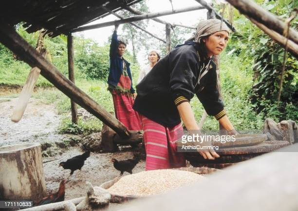 young women threshing rice in jungle, thailand - threshing stock photos and pictures