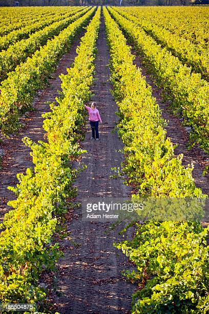 A young women walking in a grape vineyard in fall.