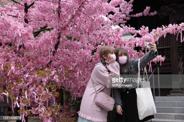 Young women wearing face masks take selfies in front of the Kozu Zakura tree at Sakura Jingu Shrine. The Cherry blossom also known as Sakura in Japan...