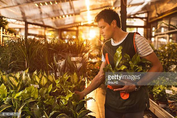 Young worker working with plants in garden center.