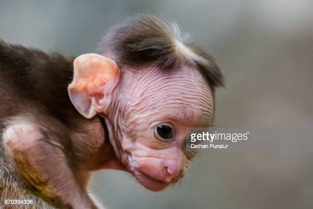 young world - ugly monkey stock photos and pictures
