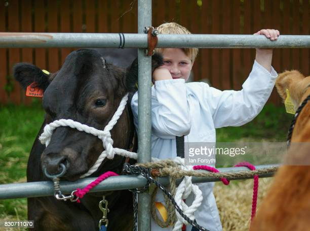 A youngster stands with his cow during the 194th Sedgefield Show on August 12 2017 in Sedgefield England The annual show is held on the second...