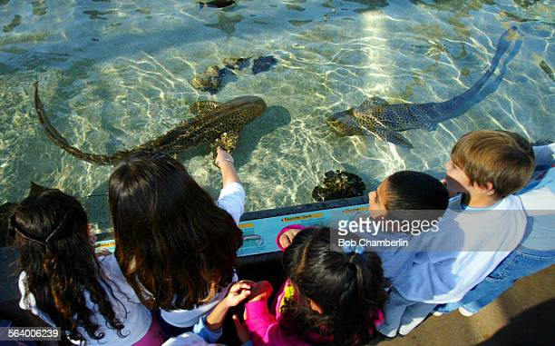 Youngsters enjoy shark and ray touching exhibit on at the Aquarium of the Pacific from which animals were taken and killed in November The Aquarium...
