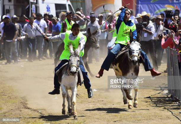 Youngsters ride donkeys during the National Donkey Fair in Otumba Mexico State Mexico on May 01 2018 The National Donkey Fair is held each year and...