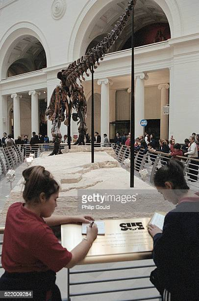youngsters studying sue the tyrannosaur - field museum of natural history stock pictures, royalty-free photos & images