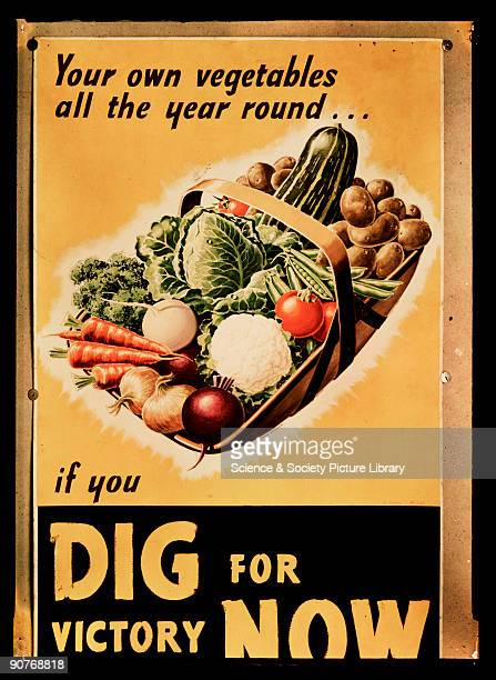 �Your own vegetables all the year round_if you Dig for Victory Now� Dufaycolor colour transparency copy of a British Second World War propaganda...