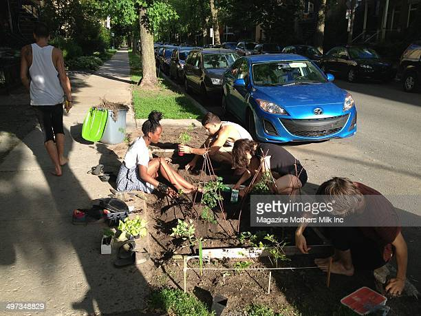 Youth collective gardening in the Rosemont neighborhood of Montreal