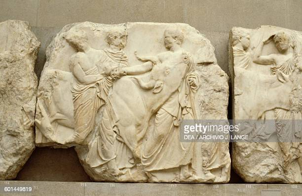 Youths leading a heifer to the sacrifice 447433 BC from the South frieze of the Parthenon Acropolis of Athens Greece Greek civilisation 5th century...