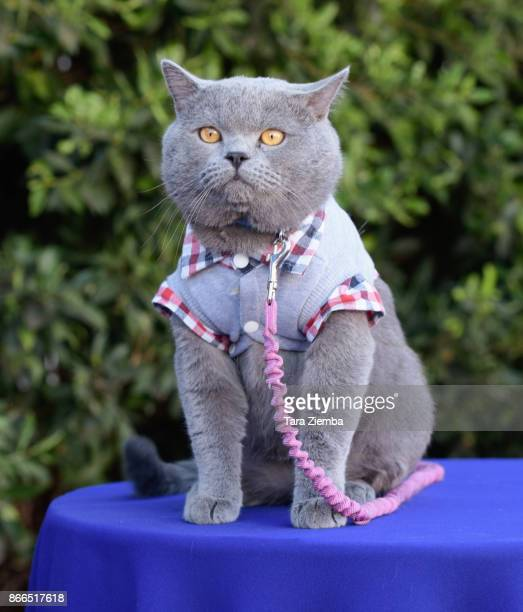 YouTube personality Prince Michael the cat attends the unveiling of 'Cat Luv' Mural at Los Angeles Animal Shelter at The Amanda Foundation on October...