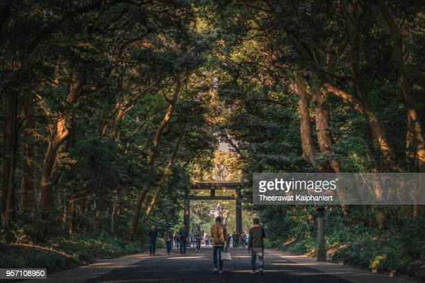 yoyogi park (tokyo hidden forest), japan - meiji period stock pictures, royalty-free photos & images