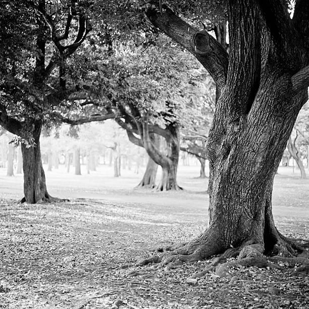 Yoyogi park, Japan, Tokyo