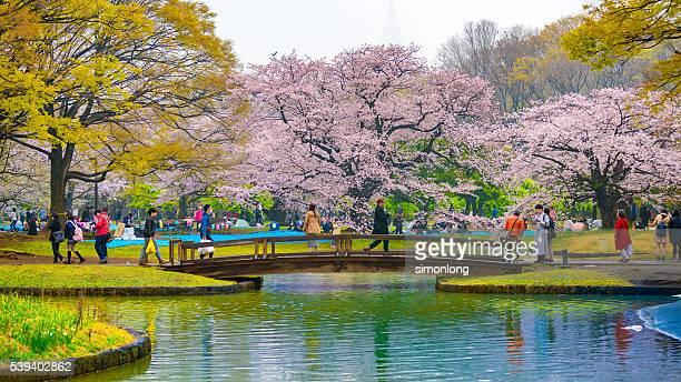 Yoyogi park Tokyo, Japan