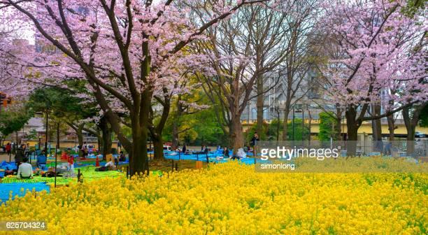 Yoyogi Park, Tokyo ,Japan