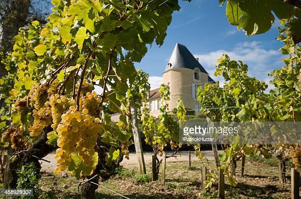 yquem castle - bordeaux stock pictures, royalty-free photos & images