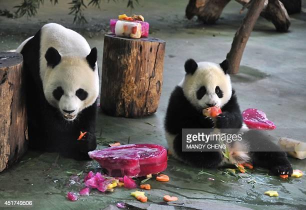 Yuan Zai the first Taiwanborn baby panda and her mother Yuan Yuan enjoy Yuan Zai's birthday cake during the celebration of her first birthday at the...