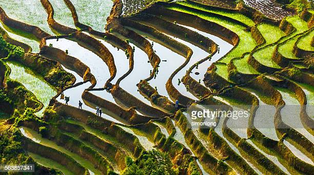yuangyang rice terrace, yunnan, china - reisterrasse stock-fotos und bilder