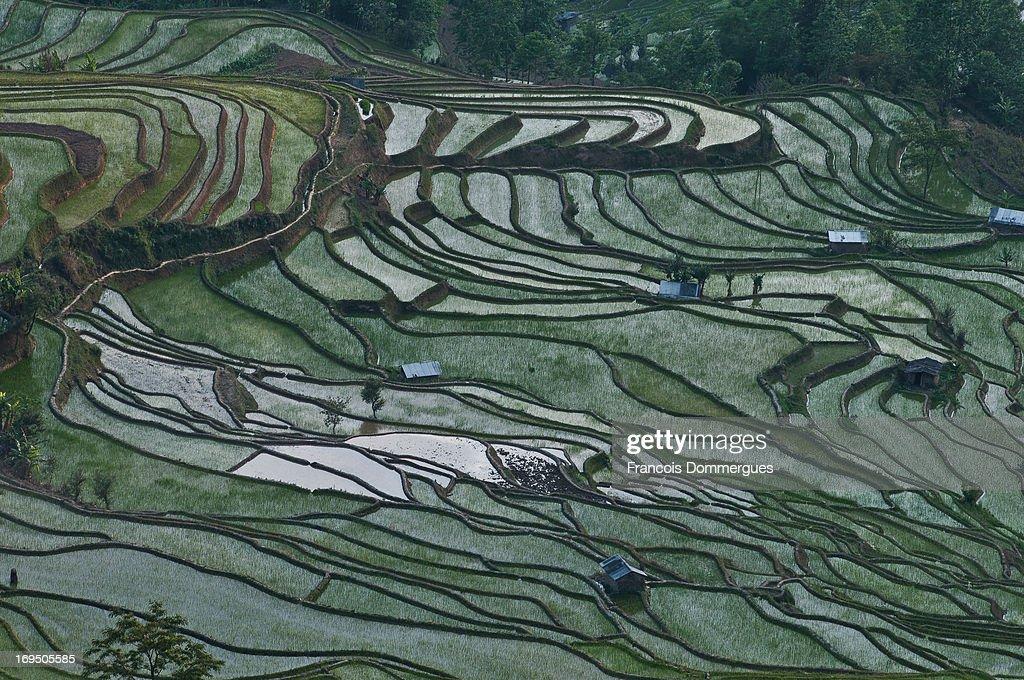 Yuanyang Rice Terraces : News Photo