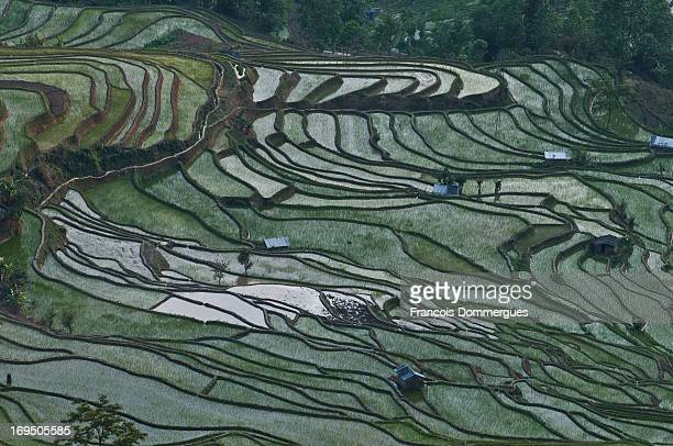 Yuanyang County is located in Honghe Prefecture, Yunnan province, along the Red River. It is well known for its spectacular rice-paddy terracing. It...