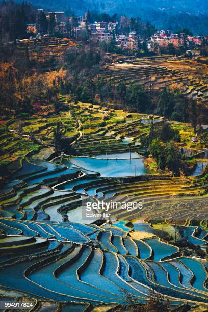 yuanyang rice terrace field during afternoon from top angle vertical view with village as background - yuanyang stock pictures, royalty-free photos & images